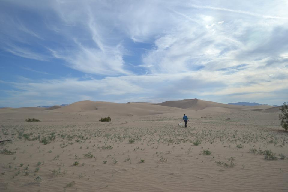 ASU Researcher collecting insects on California Sand Dunes